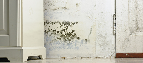 Protecting Your Home From Summer Mold