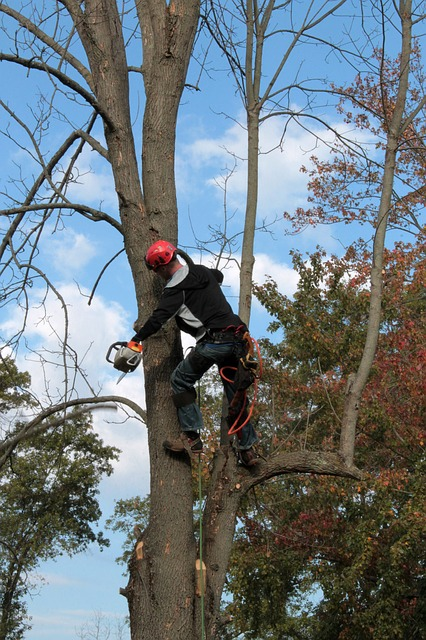 DIY vs. Professional Tree Service | Should I Hire Someone for Tree Trimming?
